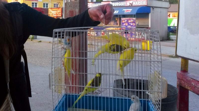 """""""Tie vtáčiky"""" v klietne na stanici v Nitre (8.6.2018)"""